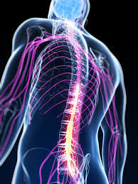 Lead Clinical Specialist Physiotherapist in Spinal Cord Injuries