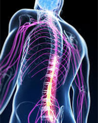 spinal-cord Injury